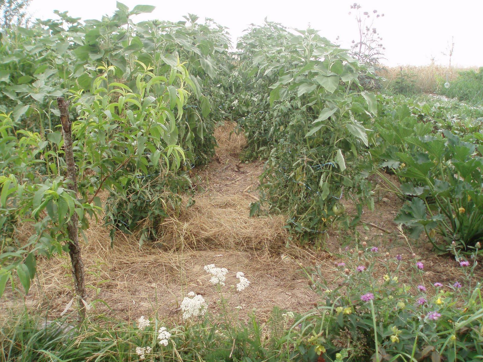 Mach bio jardiner bio conseil pour une nouvelle saison for Au jardin potager