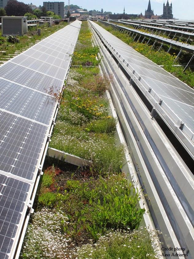 nature en toit le blog le toit bio solaire du palais de beaulieu lausanne. Black Bedroom Furniture Sets. Home Design Ideas