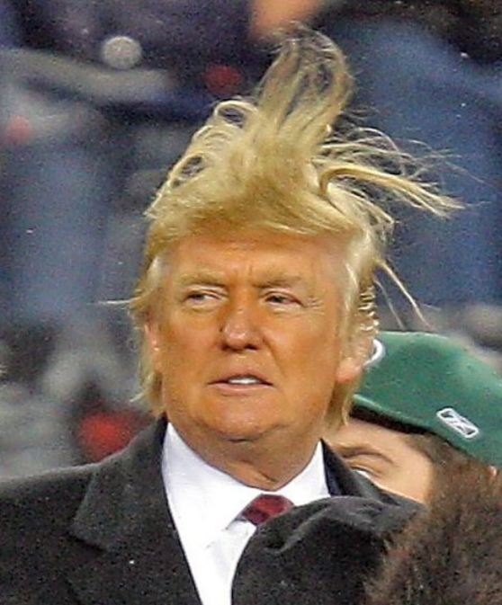 Pin Donald Trump Hair Jokes On Pinterest