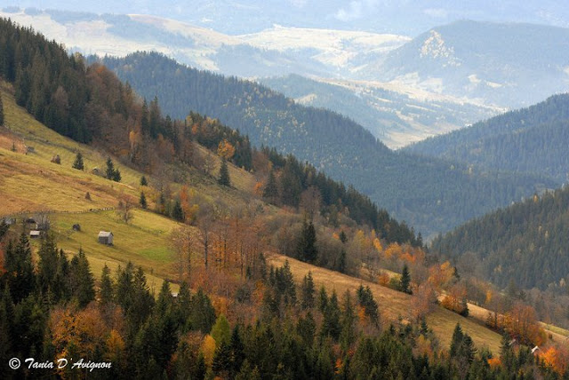 Carpathian Mountains by Tania D'Avignon
