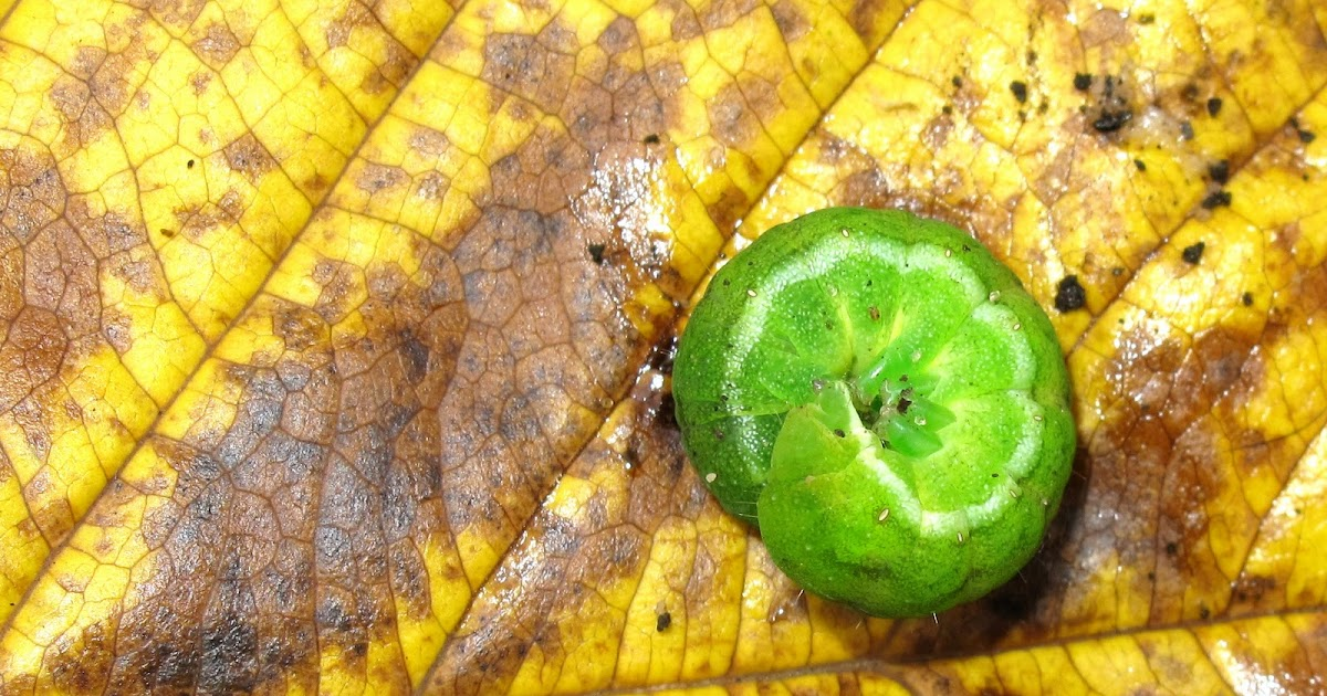 Used Caterpillar Natural Gas Generator