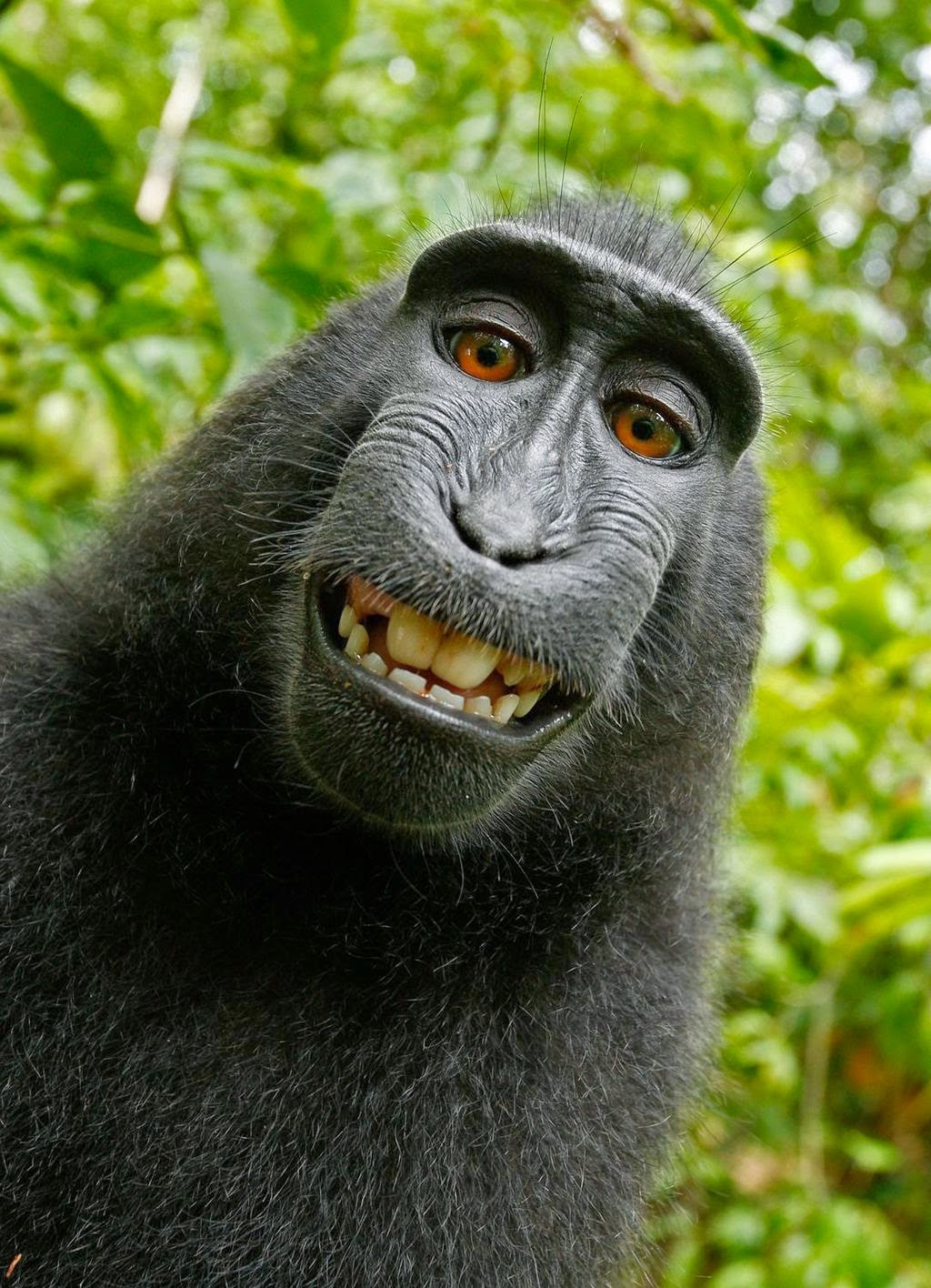 http://www.telegraph.co.uk/technology/news/11015672/Wikipedia-refuses-to-delete-photo-as-monkey-owns-it.html