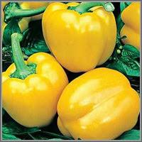 Сладкий перец сорт «Золотой дождь»