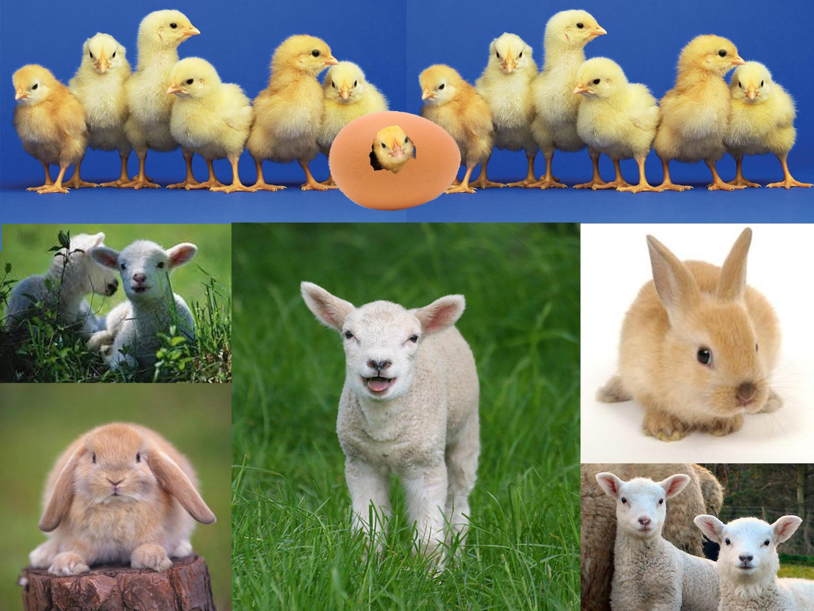 the difference of 25 thema of march spring animals