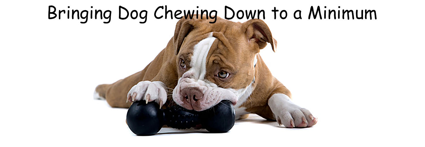 Bringing Dog Chewing Down to a Minimum