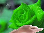 Green rose is one of the most exquisite rose. What is different about Green .