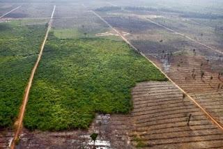 Kehancuran hutan indonesia