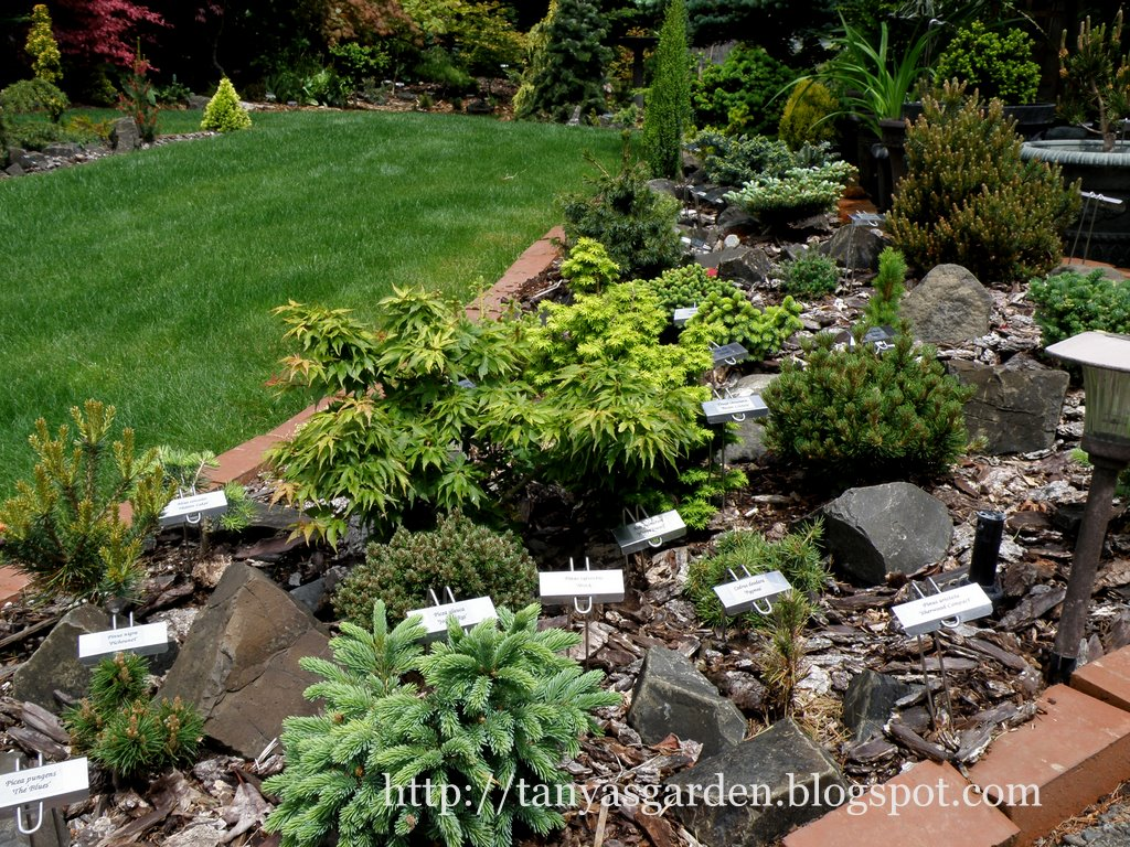 MySecretGarden Garden Of The Conifer Collector Part 2