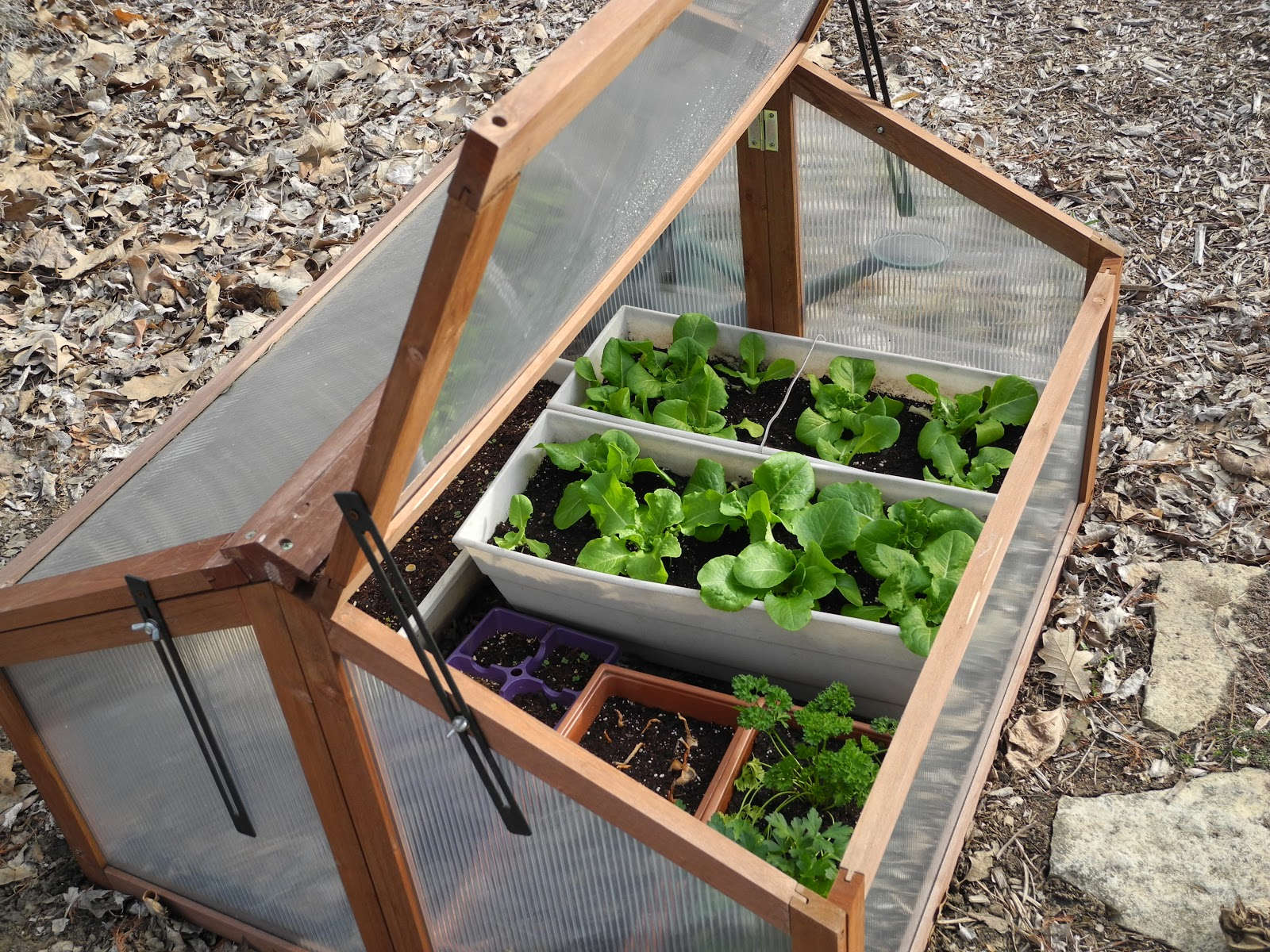The Phytophactor: Early season gardening - cold frame