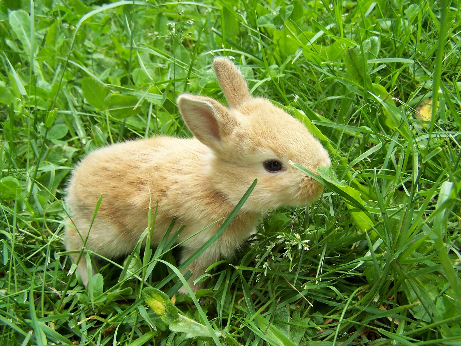 Cute little rabbits hd wallpapers