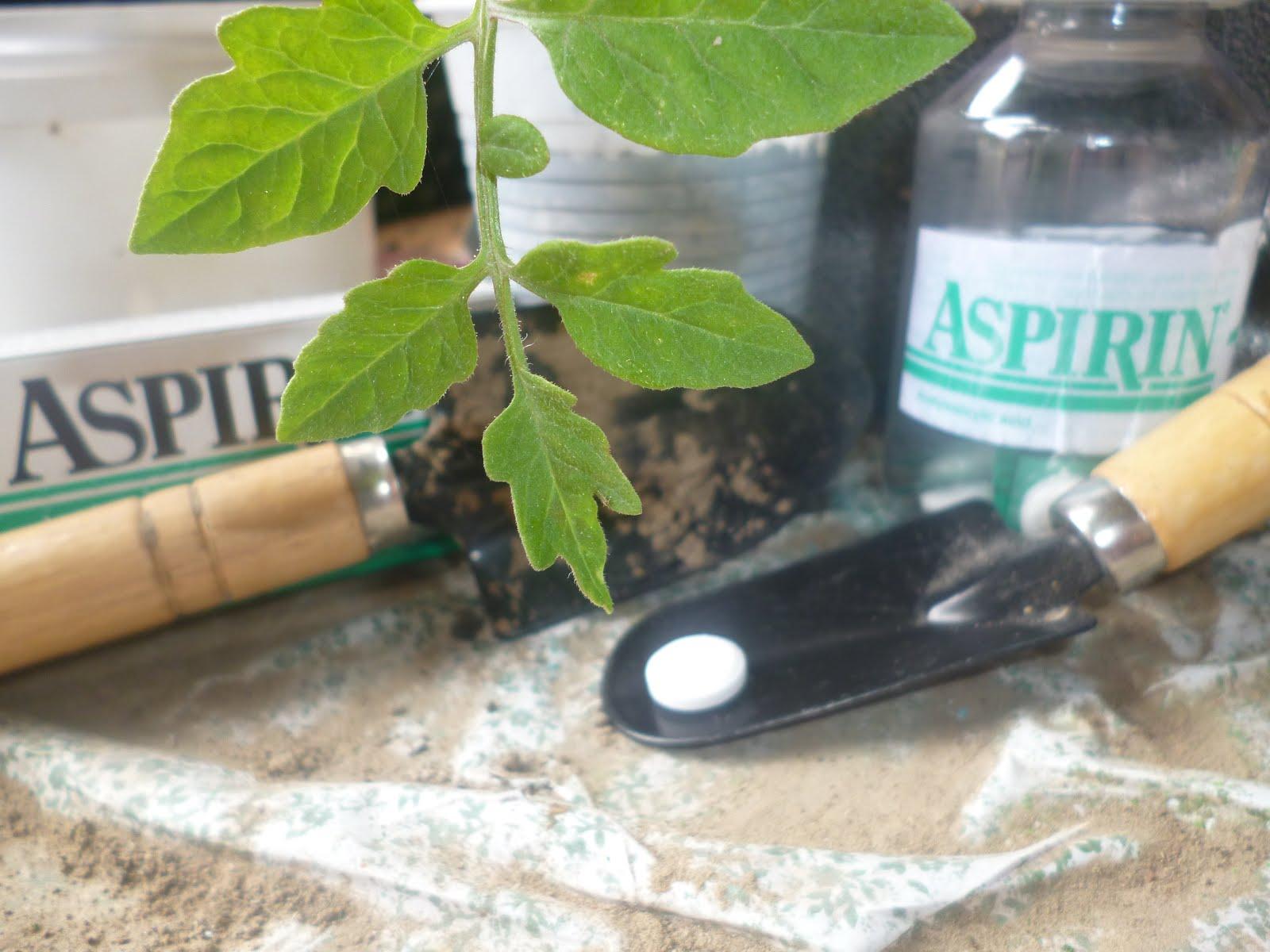 Ασπιρίνη στα φυτά
