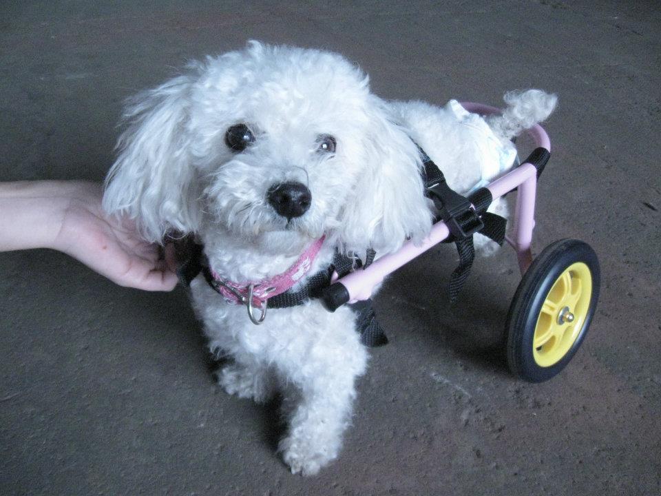 Carritos ortopedicos para perros y casitas amigos de las for Carritos para perros