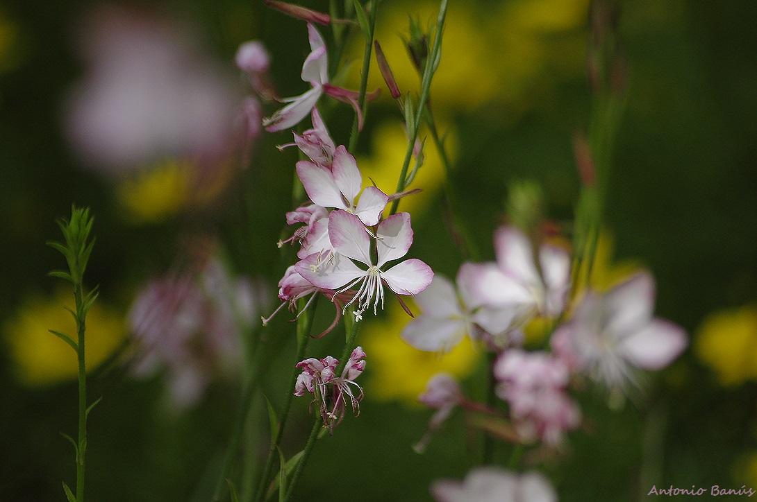 Aprendiendo con la vista las fotos de un paseo por el for Jardin botanico cursos