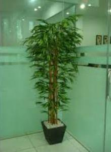 Palem bambu