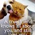 Ένας αληθινός φίλος...