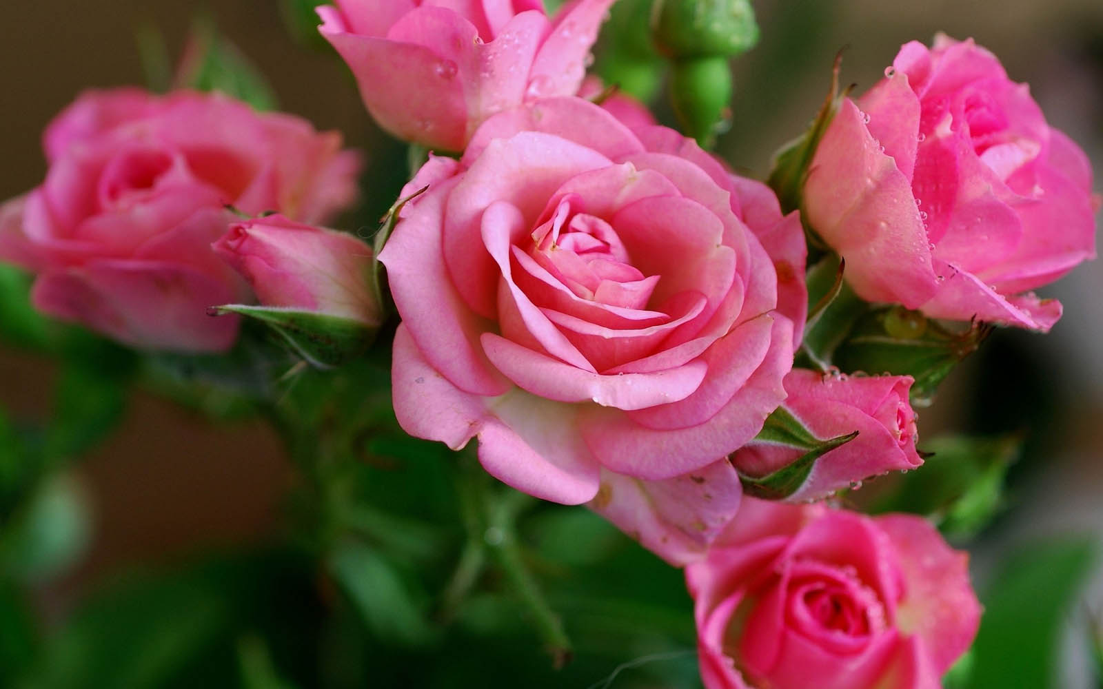Flowers desktop backgrounds pink flowers photos pink flowers images
