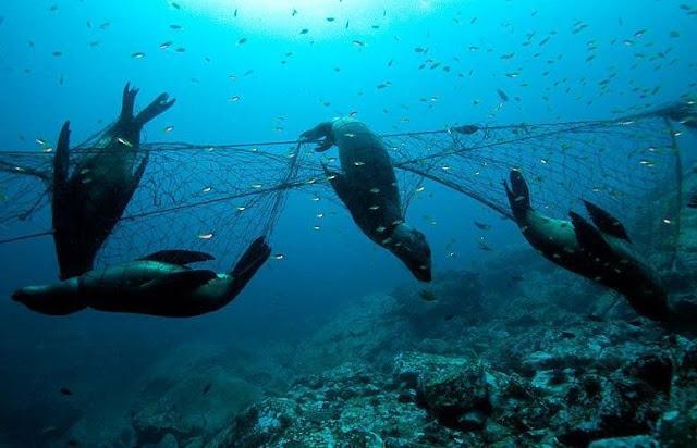 дружба это фото погибших морских млекопитающих