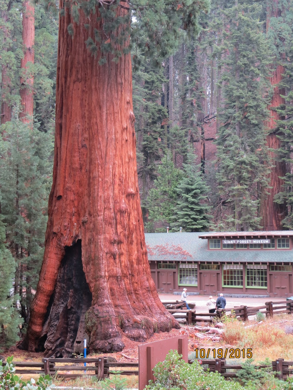 vrbo mountain in monument park cabins cabin national sequoia