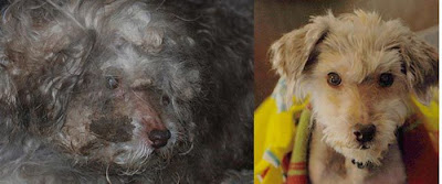 Before and After Animal Rescue Seen On www.coolpicturegallery.us