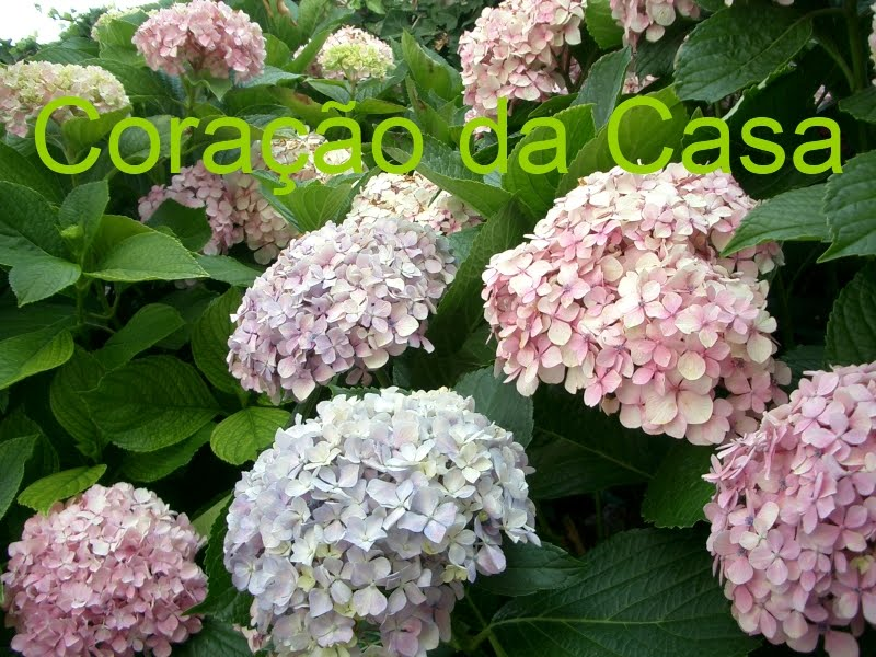 Corao da Casa