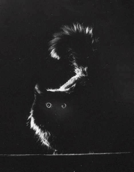 A B&W portrait of Blackie silhouetted against black, with white light catching his fur tips.