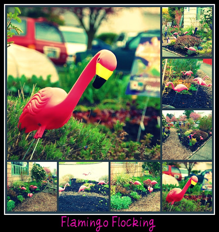 Flamingos Rock!!
