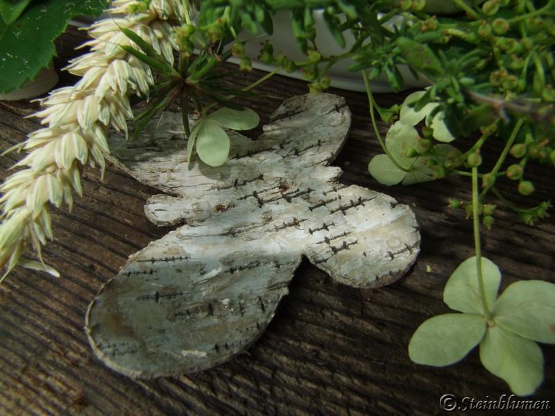 Schmetterling Birkenrinde
