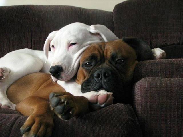 dogs as best friends, dogs sleeping together