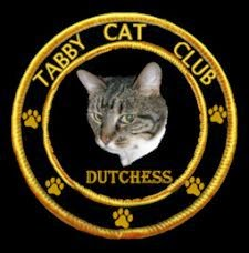 Duchess in the Tabby Cat Club