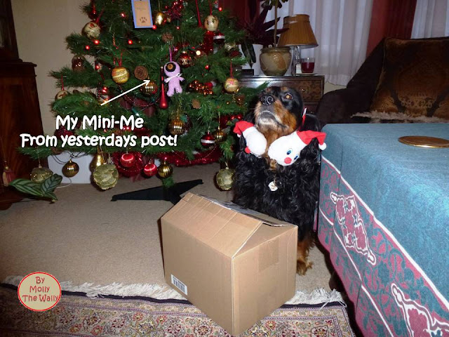 Molly The Wally Has An Easy Christmas 1 !
