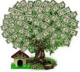 Pohon Dollar