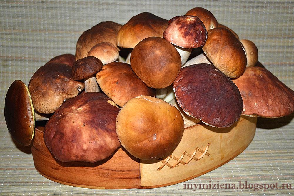 грибной урожай