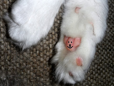 Anaking two legged cat fuzzy Teddy Bear Jelly Bean Toes!!