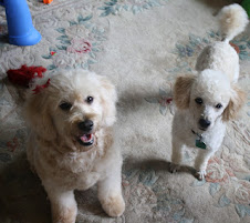 Sandy Doodle & Frankie Poodle, Parents of F1b miniatures