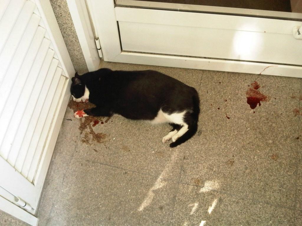 Proyecto gato mosquiteras para que - Como poner una mosquitera ...