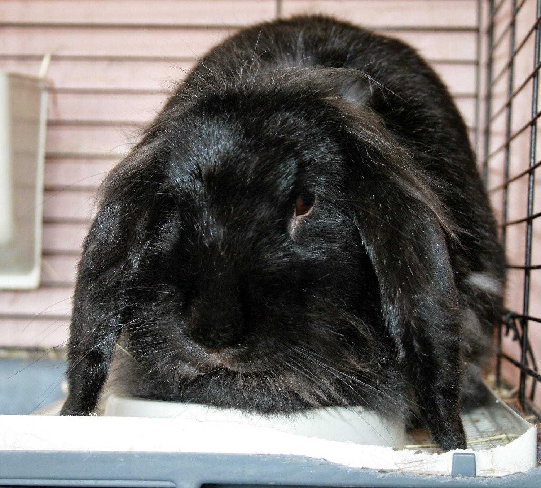 The big fluffy bummed Sassy