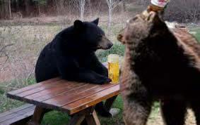 oso bebiendo cerveza