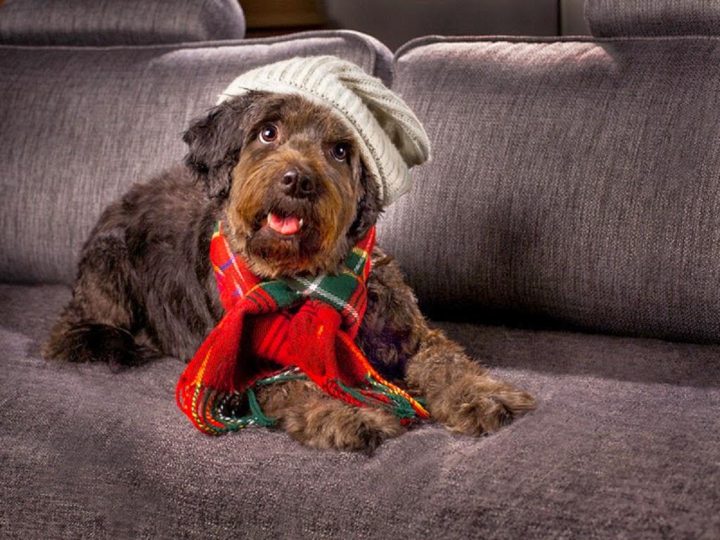 """<img src=""""http://4.bp.blogspot.com/-esRtYjE3p_Q/UtqdjGMkgWI/AAAAAAAAI0c/njadJAfRkL0/s1600/december-dog.jpeg"""" alt=""""december dog"""" />"""