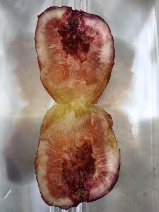 Figs: DE SON QUATERA( Balearic Island)