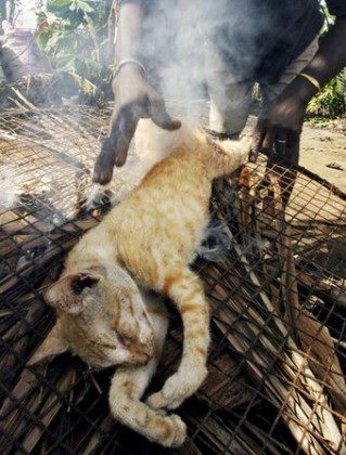 Cats For Sale Philippines Facebook