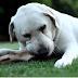 Τι αξίζει ένας καλός σκύλος...