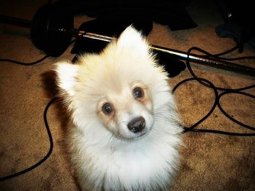 Most Inspiring Fluff Ball Adorable Dog - tumblr_mf1u9qVNyP1qbaukgo1_500  Image_718589  .jpg