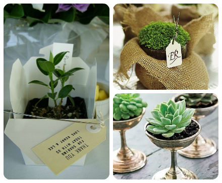 wedding favors plant a flower