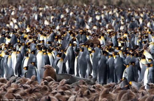 Please find my penguin pet