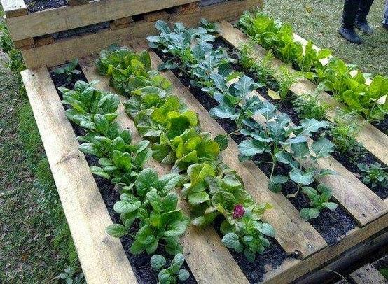 Huerto jardín con Pallets
