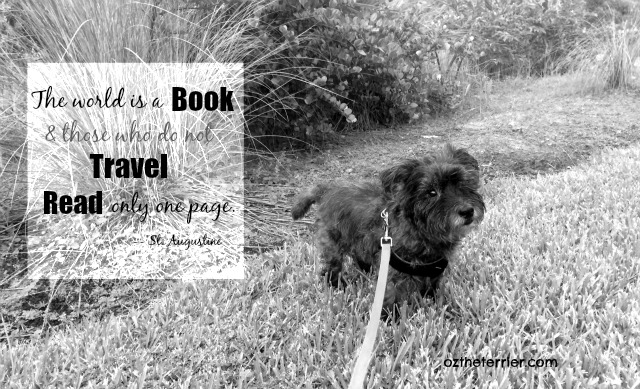 "Oz the Terrier quotes St. Augustine ""The world is a book and those who do not travel read only one page"""