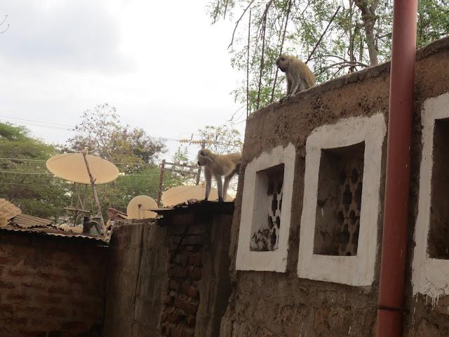 Elder daniel thomas kenya nairobi mission