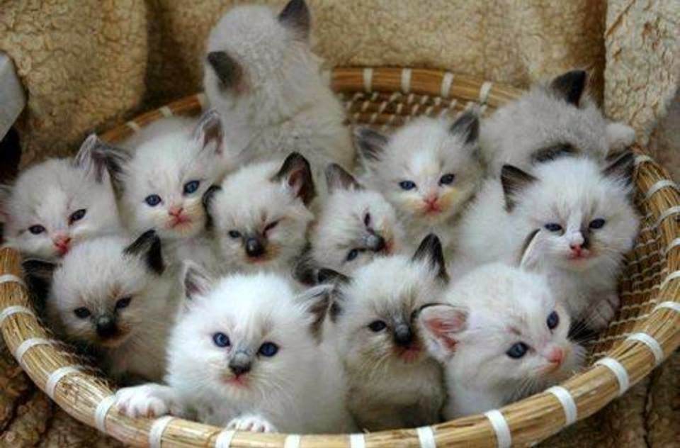 cutest kittens