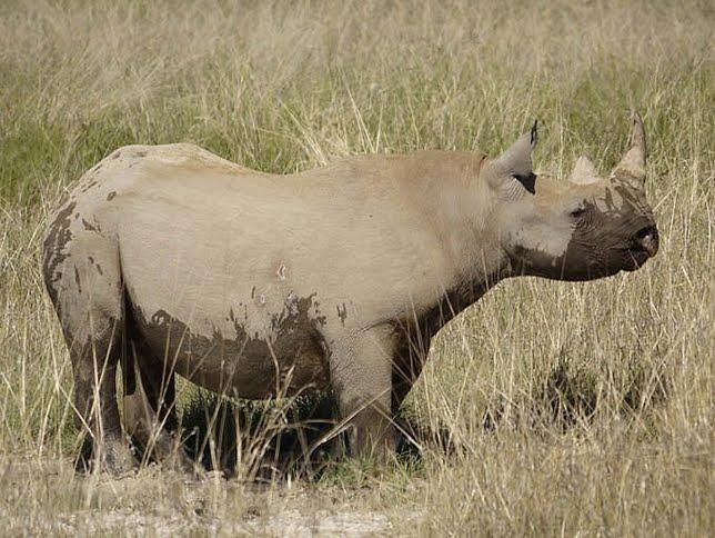 .com: En Imágenes: 10 animales increíbles que ya se extinguieron