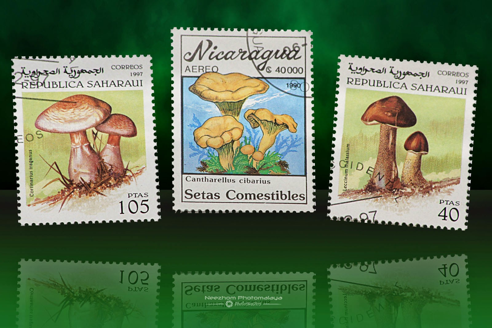mushrooms stamps